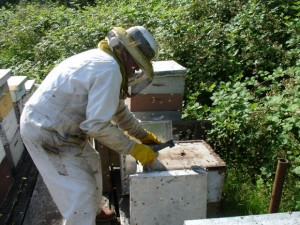 bee keeper Fauquier County